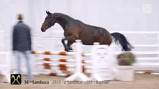 Sie möchten ein Pferd kaufen? Stars von morgen und Freunde fürs Leb...