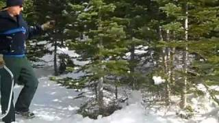 In Search of a Christmas Tree: Lakes Basin, Plumas National Forest