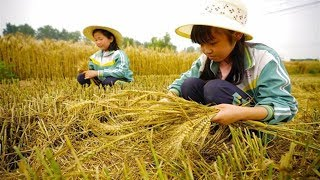Científicos chinos buscan potencializar el rendimiento del