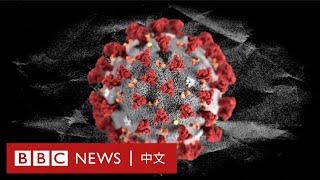 肺炎疫情:英國科學家成功複製冠狀病毒,疫苗將進行首次臨床試驗- BBC News 中文