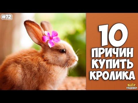 10 Gründe des RABBIT KAUFEN - Interessante Fakten!