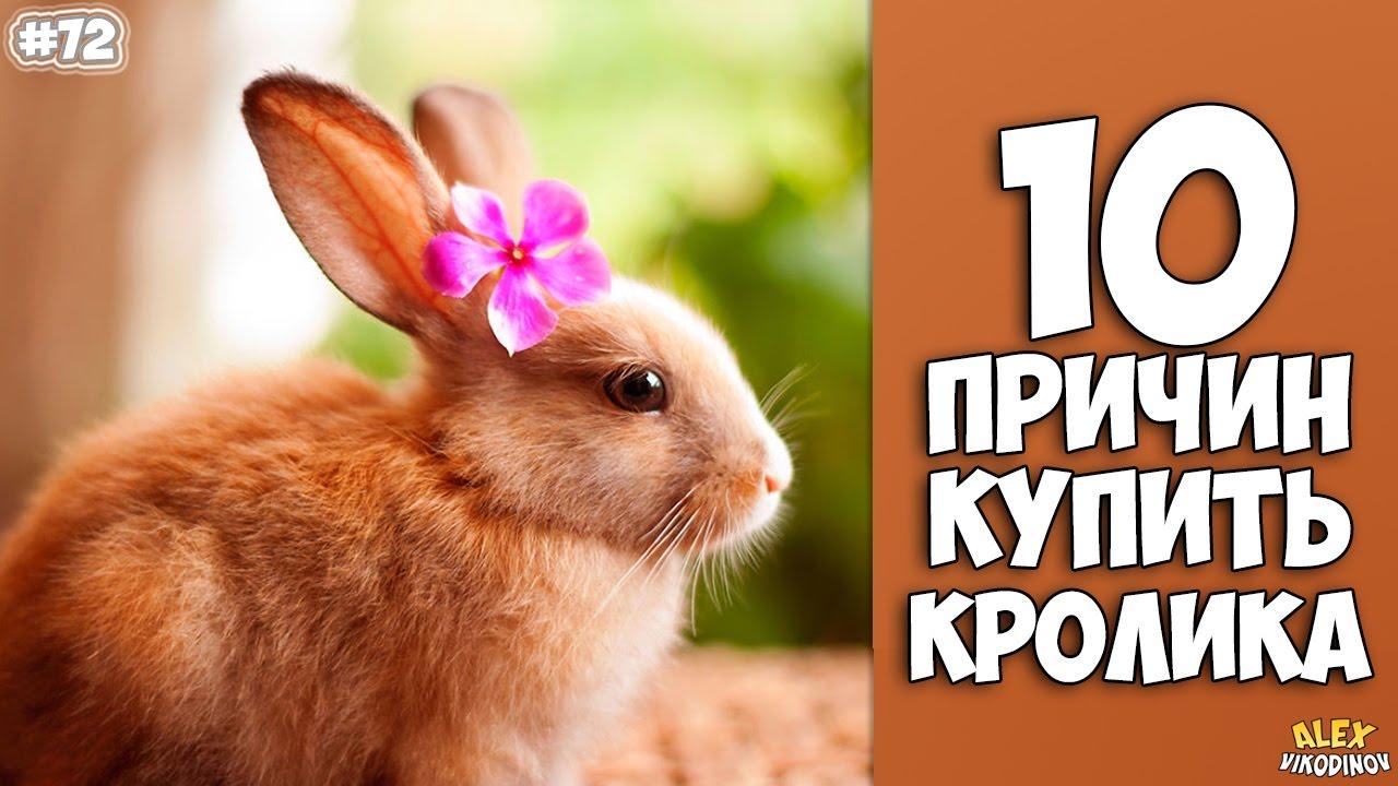 10 ПРИЧИН КУПИТЬ КРОЛИКА - Интересные факты!