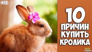 10 ПРИЧИН КУПИТЬ КРОЛИКА - Интересные факты!(, 2016-10-14T21:05:23.000Z)