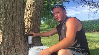 How not to tap a tree for water: what you need to know about tree tapping: