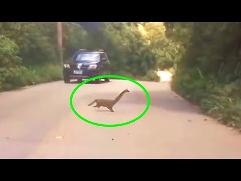 What Happened To These Mysterious Creatures Seen Crossing A Road?