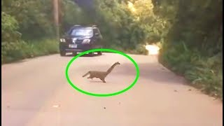 what-happened-to-these-mysterious-creatures-seen-crossing-a-road