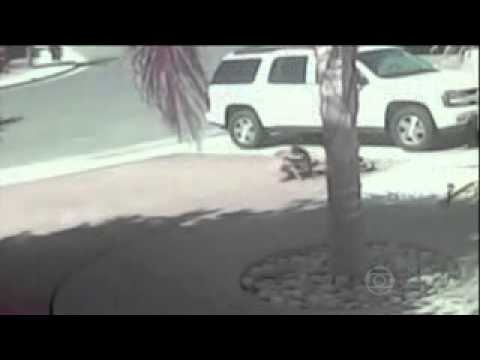 INCRÍVEL Gato ataca cachorro  Pit bull para defender a criança – Cat attack Dog Pit Bull