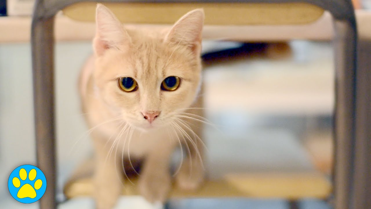5 Easy Hacks Your Cat Will Love
