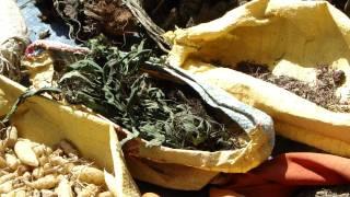 Medicinal Plants of Chhattisgarh (Mohani Jadi): Pankaj Oudhia
