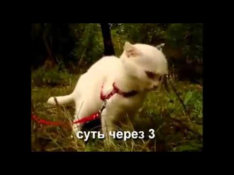 чеширский кот приколы