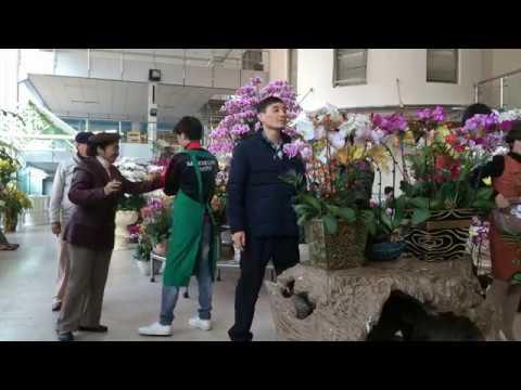 Chợ hoa Vạn Phúc, Quảng An-Hà Nội Xuân Đinh Dậu 2017