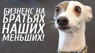 Бизнес на приюте для животных /с Андреем Половковым / Как заработать 2019?