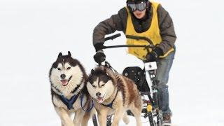 3月28日~29日に幌加内町母子里であった、今季最後の犬ぞりレースです。...