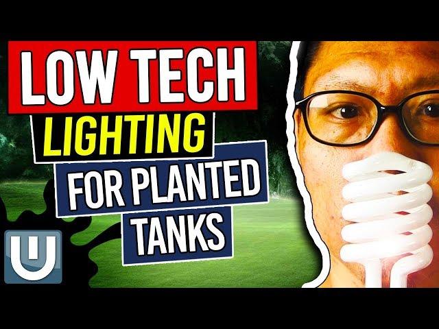 Low Light Options for Planted Tanks – Planted Aquarium Lighting Guide – Part 5