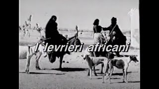 I Levrieri Africani  documentario su Sloughi e Azawakh
