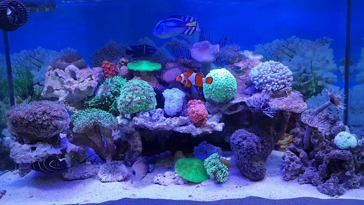 Aqurium Air Laut Filter Belakang