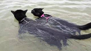 Adorable cats swimming together for the first time!