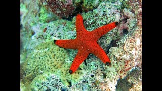 Facts: The Sea Star (Starfish)