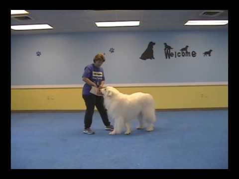 how to teach your dog to spin