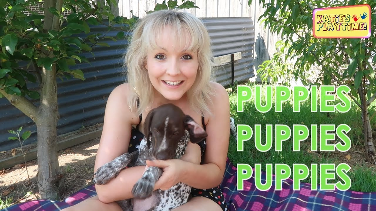 how to teach a puppy to sit youtube