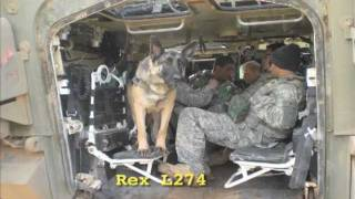 Soldier Dogs Book Trailer