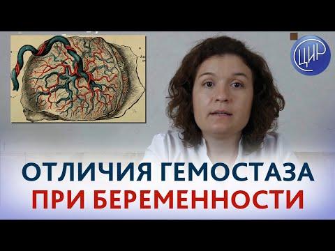 Гемостаз при беременности. Кровообращение при беременности и плацента человека.