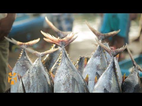 Negombo Fish Market | Sri Lanka Discoveries | World Nomads