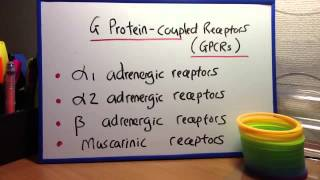 G Protein - coupled receptors (GPCRs)