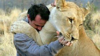 Тигры, львы и гепарды любят обниматься - большие кошки. компиляция