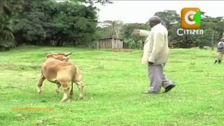 Mgaagaa na Upwa: Mfugaji, Wanyama Walemavu