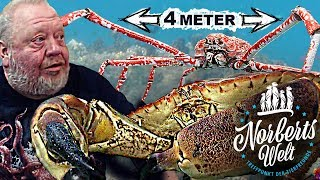 KREBS und KRABBEN! Meeresmonster und Ozeanriesen! | NORBERTS WELT | Zoo Zajac