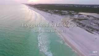 Loggerhead & Black Tips (DJI-Inspire) Santa Rosa Beach, Fl.