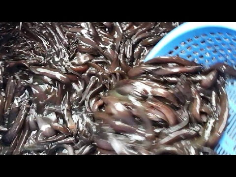 Incredible Biggest Fish Aroth ( Whole Sale Market ) in Dhaka City Bangladesh