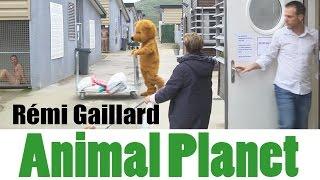 動物病院を貸しきっての壮大なるどっきり「アニマル・プラネット」