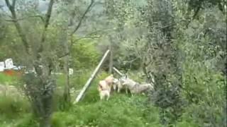 Cani: il gioco