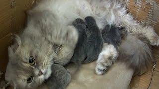 Кошка родила котят!