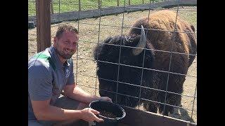 Animal Adventures with Jordan: American Bison thumbnail