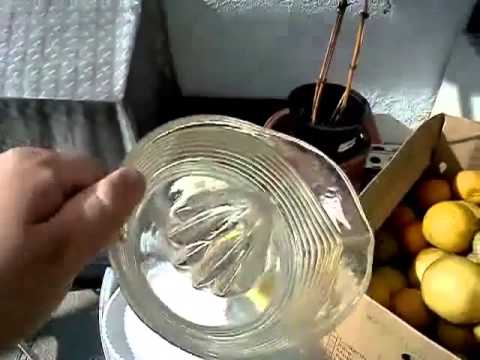 How To Make Citrus Wine