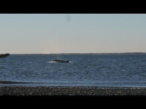 No Esperaba Ver Delfines Al Atardecer   Las Grutas Y San Antonio Oeste, Río Negro