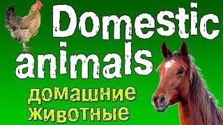 Домашние животные по английски с произношением видео для детей