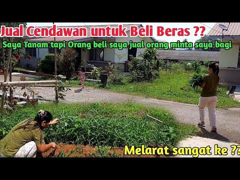 JUALAN KANGKUNG DI MALAYSIA