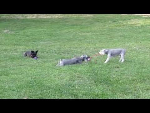 Paw Buddy | Schnauzer Fun | Dog Mom Life