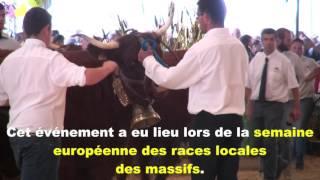 Les champions de la race Salers à Saint-Flour