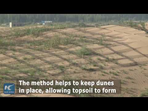 How China turns deserts into green