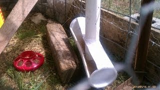 chicken pvc feeder plus pvc pex water nibbler no wasted feed or water