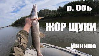 Рыбалка на реке Обь Нереальный клев щуки и судака Рыбалка в Инкино