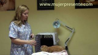 Gatos con la Dra. Lina Sanz, La elección de la caja de transporte