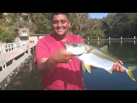 Landbased Sydney Kingfish,bream,trevally