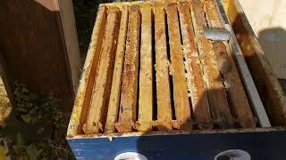 Пчеловодство в США сокращение семьи в зиму.