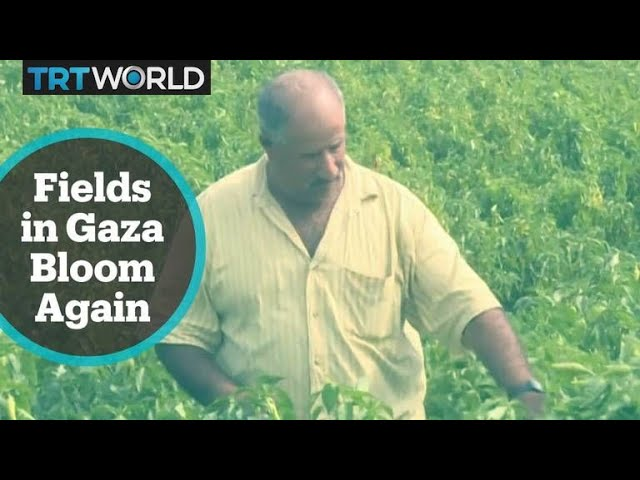 Gaza Agriculture: Fields ravaged by Israeli chemicals bloom again